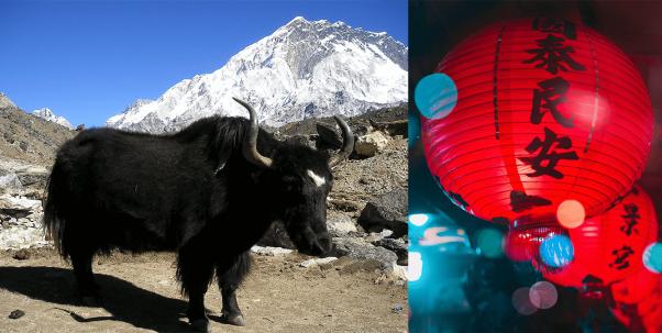 ox on Lunar New Year