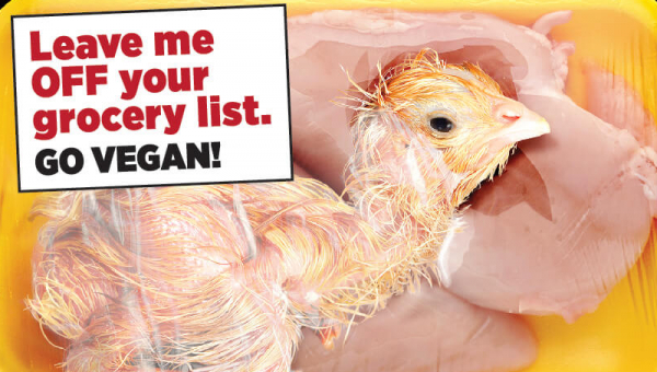 Help Others Leave Chickens OFF Their Grocery List With Stickers