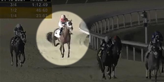 WATCH: Racehorse Breakdown at Turfway Park