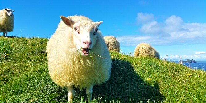 Growing Up on a Sheep Farm Made This PETA Staffer Go Wool-Free