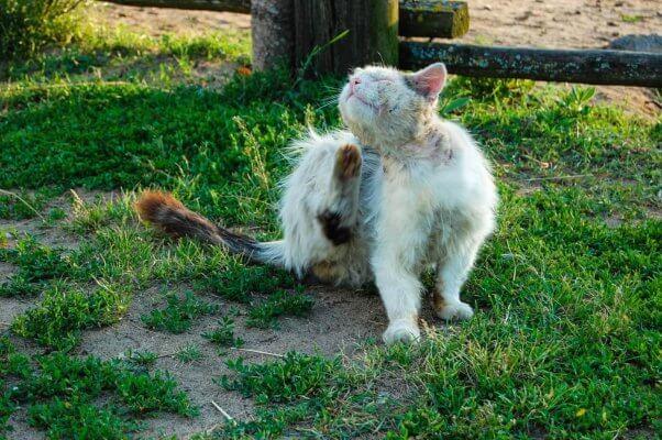 TNR: cat sits on the grass