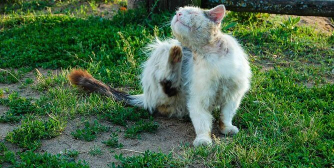 To TNR or Not to TNR—That Is the Question