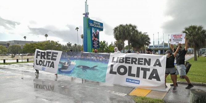 PETA Latino Hung Massive Banner Demanding Freedom for Lolita