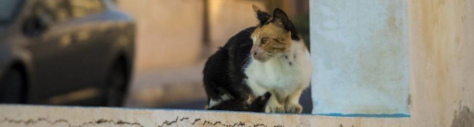 homeless cat sits on ledge