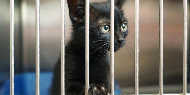 small black cat/kitten in shelter