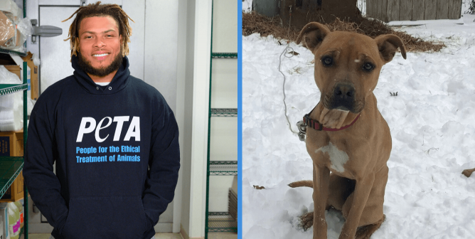 An Interception in PETA's Books! Tyrann's Takedown Scores $100K for Desperate Dogs