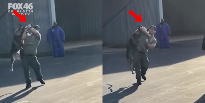 Caught on Video: Police Officer Hanging, Slamming, and Punching K-9
