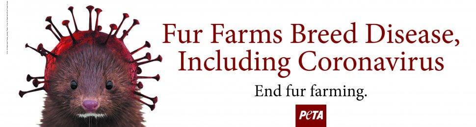 Fur Farms Breed Disease, Including Coronavirus. End Fur Farming.