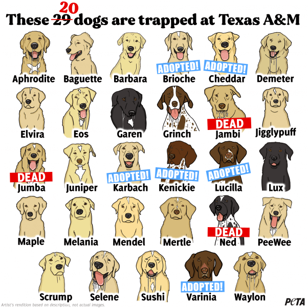Ned Dies at Texas A&M Canine MD Lab