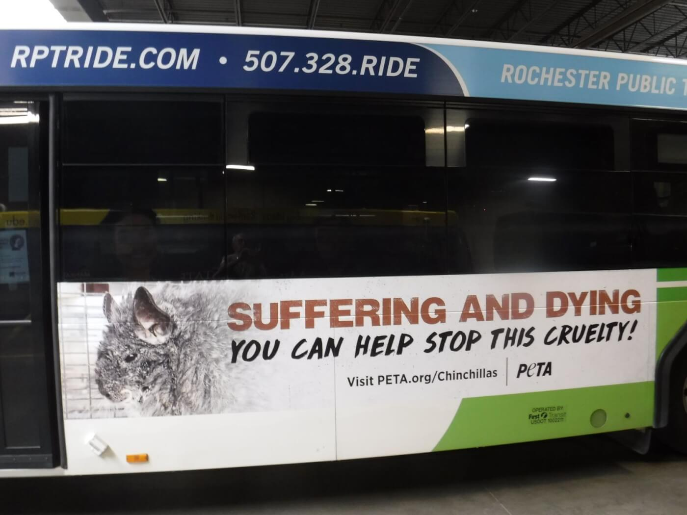 seedy Chinchilla breeder blasted in new PETA bus ads in Rochester, MN