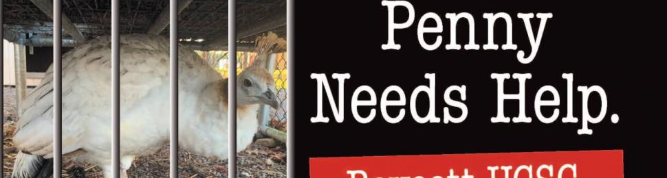 Penny Needs Help. Boycott UCSC