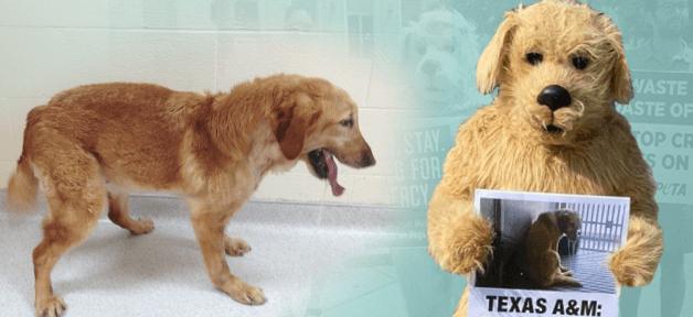Dog at Texas A&M and PETA dog mascot