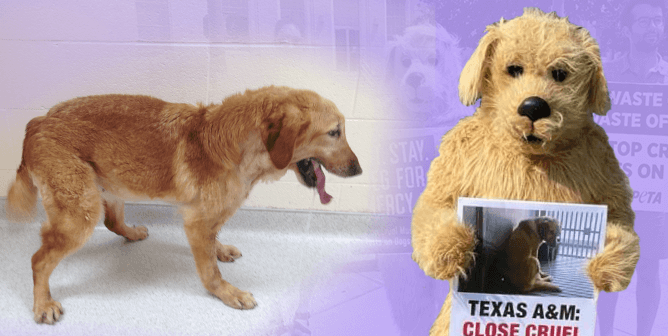 It'll Take You Less Than 19 Seconds to Help These 19 Dogs Trapped at Texas A&M