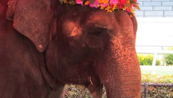 Two Elephants Dead Within Months of Each Other—Help Others Now!