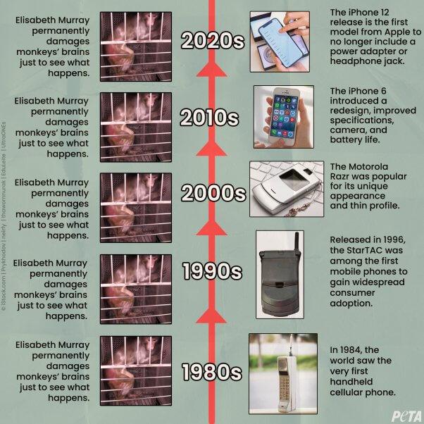 Timeline of Elisabeth Murray's NIH Monkey Experiments