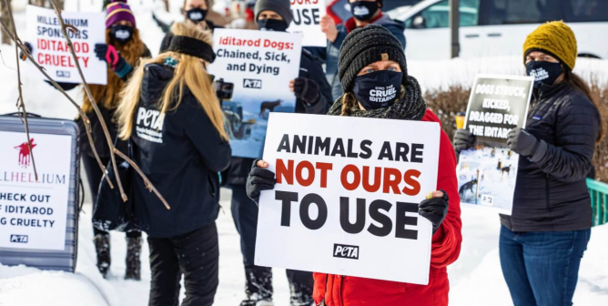 Can the Iditarod Move Forward Without ExxonMobil? Let's Ensure a 'No'