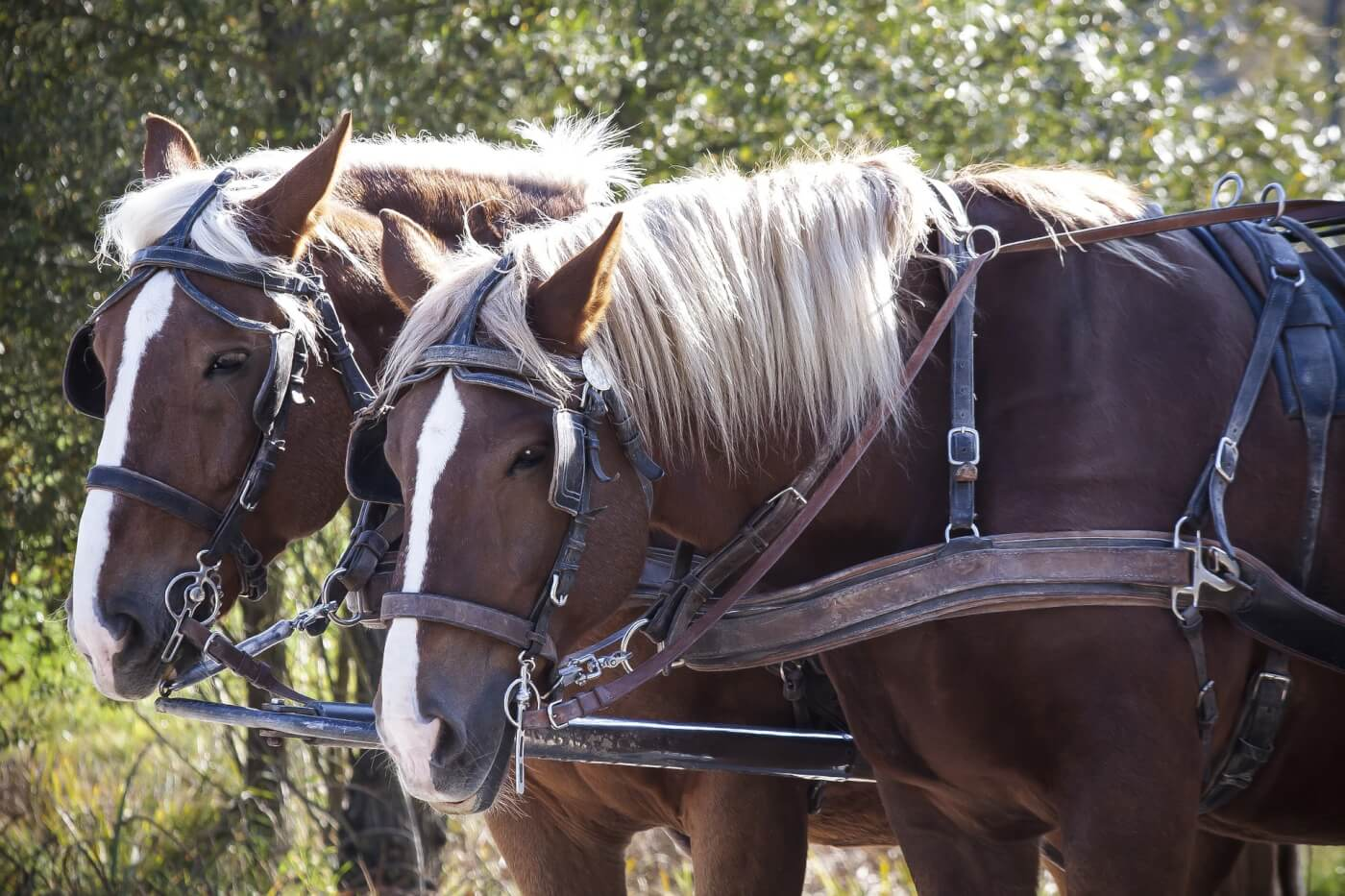 2020: Chicago Bans Horse-Drawn Carriage Rides