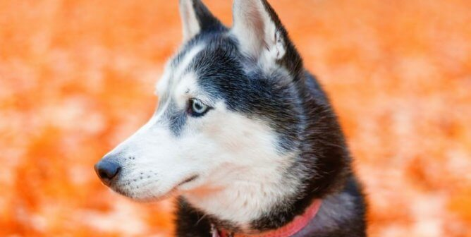 VUit Is Streaming the 2021 Iditarod Dog Death Race—Act Now!