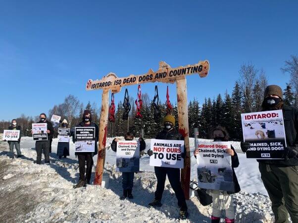 Start of Iditarod protest 2021