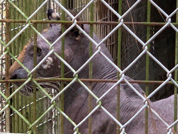 lila dead tiger bald south carolina waccatee zoo