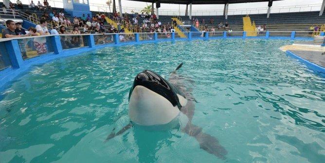 Urge The Dolphin Company to Retire Lolita to a Seaside Sanctuary