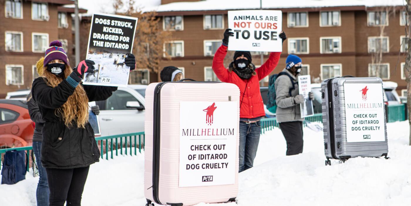 PETA Iditarod protest outside Millennium Hotel
