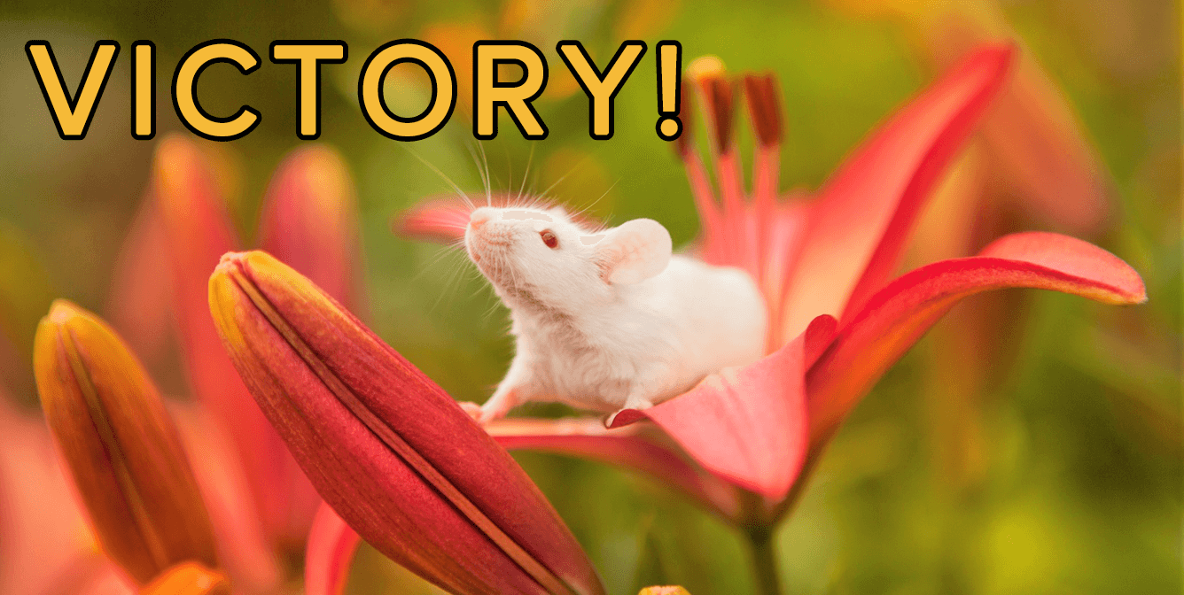 Victory image of white mouse in lily