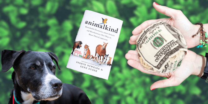 14 Ways to Make Your Stimulus Check Count for Animals