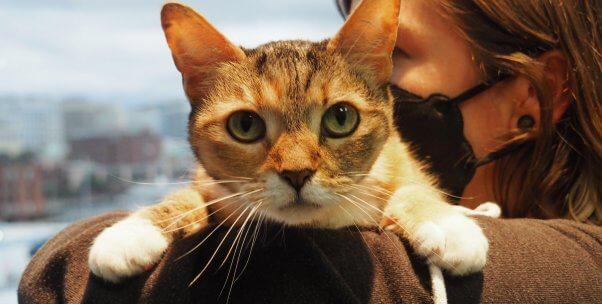 Pretty rescued cat Pearl