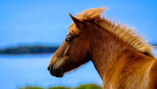 Take Action: 8 Horses DIED in a Steel Shipping Container