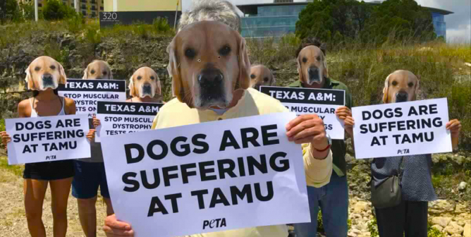 Texas A&M Lies Prove That the School Knows How Shameful Its Treatment of Dogs Is—and That It Doesn't Care