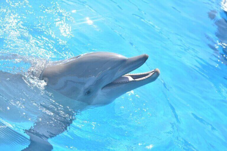 dolphin and other animal deaths at miami seaquarium exposed by PETA