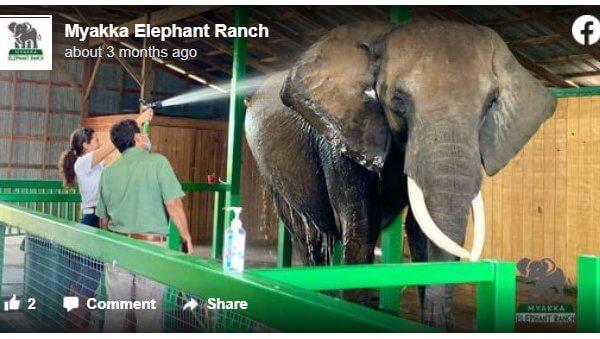 Urge Myakka Elephant Ranch to Stop Exploiting Lou, Carol, and Patty