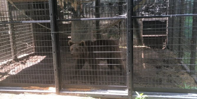 Tell Hollywild Animal Preserve That Bear Cubs Are Not Photo Props