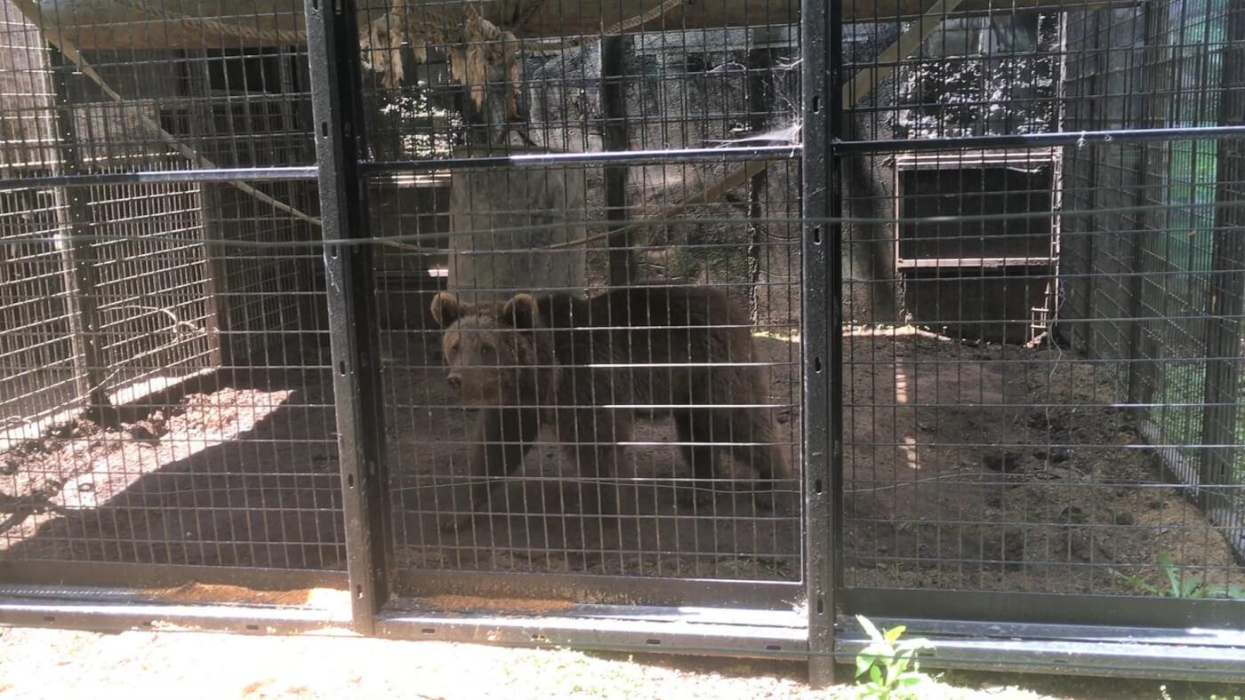 photo of bear cub at Hollywild
