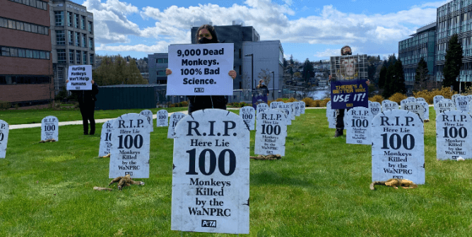 I Was a Scientist at the WaNPRC—Here's What I Witnessed