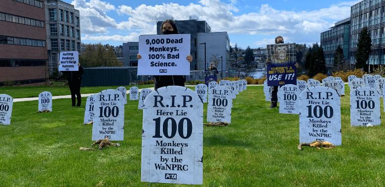 'Graveyard' Protests 9,000 Monkey Deaths at Primate Laboratory
