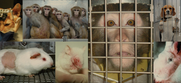 Animals used for experiments