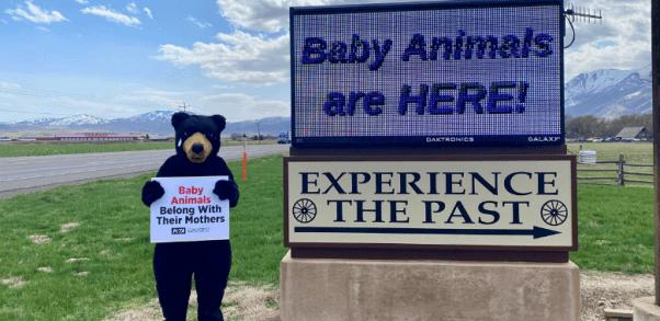 'Bear' Leads PETA Members to Blast 'Baby Animal' Event