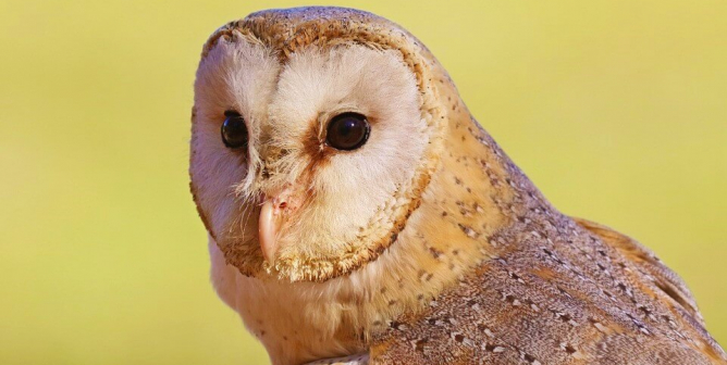 Owls' Skulls Cut Open at Johns Hopkins: Take Action Now!