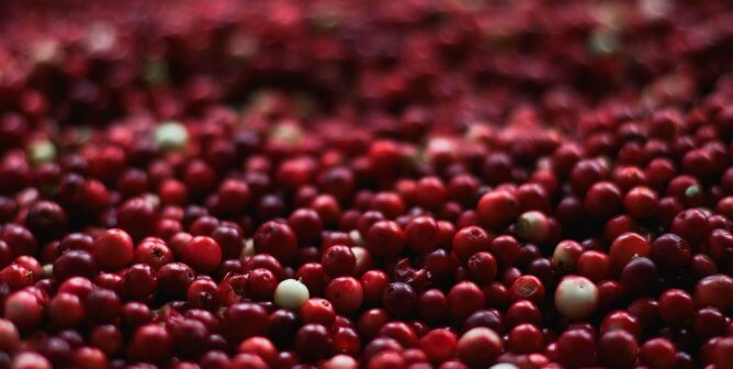 Ocean Spray Separates Itself From NIH's Use of Craisins to Carry Out Cruelty