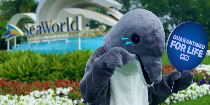 Urge SeaWorld to Stop Breeding Dolphins and Whales and Send Them to Seaside Sanctuaries!