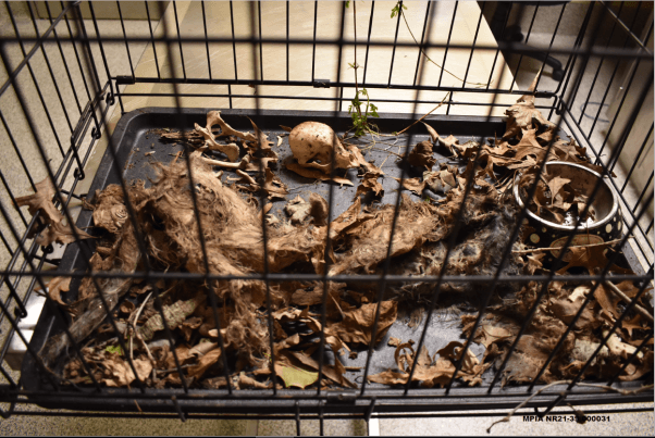 dead, decaying cats in cage at cat hoarders' home