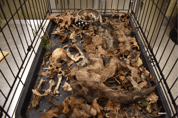 Dead, rotting cats in cage at home of cat hoarders