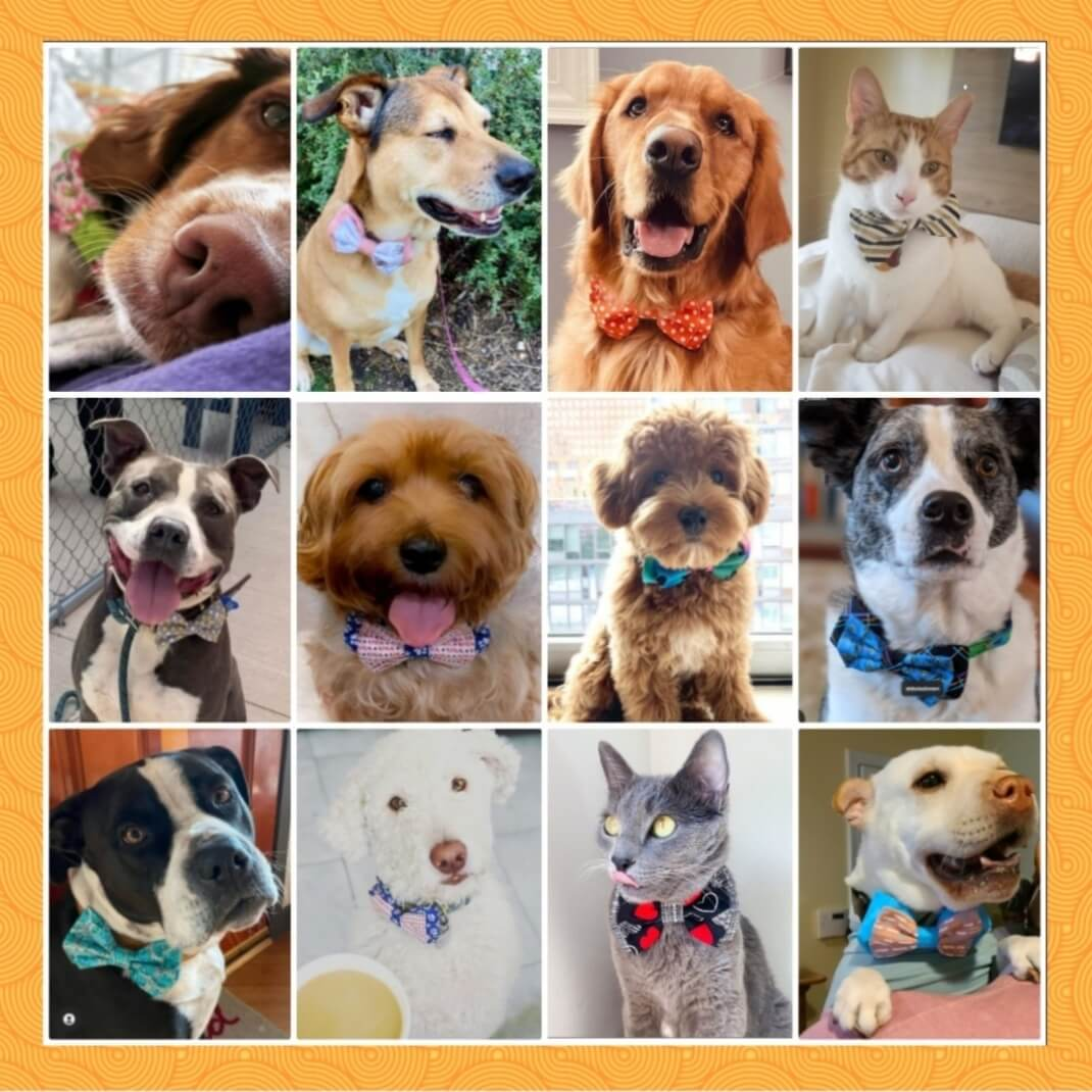 collage of dogs wearing bowties