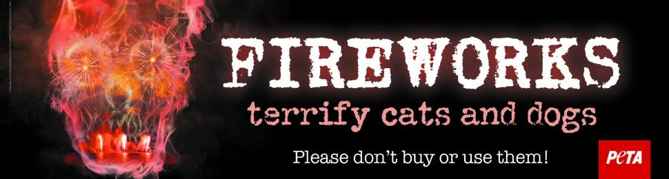 Fireworks Terrify Cats And Dogs