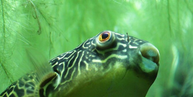 24 Mind-Blowing Facts About Fish, the Superior Beings Swimming in Seas and Streams