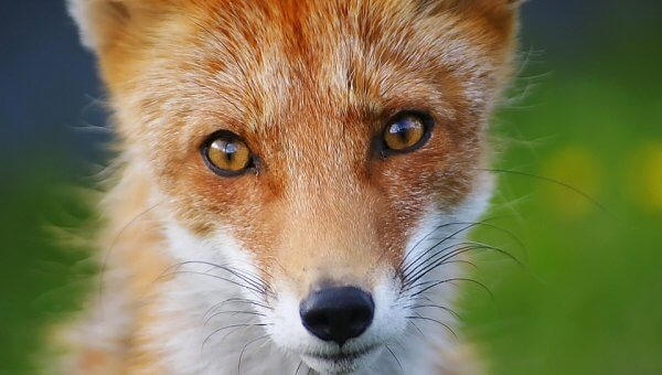 Five Minutes of Your Time Could Help Get Fur Sales Banned in the U.K.!
