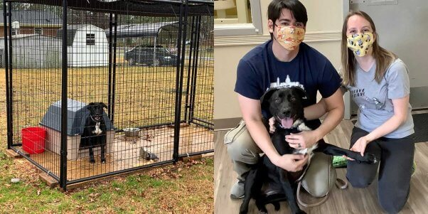 """Olga """"before and after"""" PETA's field team stepped in to help"""