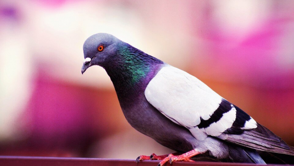 Demand That the EPA Ban Notorious Bird Poison Avitrol